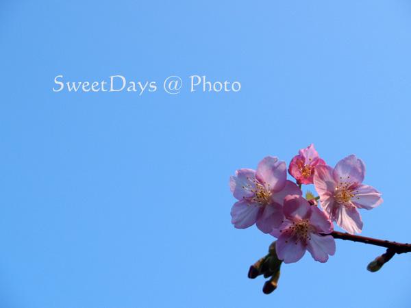 春を探しに新宿御苑へ ~梅と桜~_e0046675_23502367.jpg
