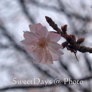 春を探しに新宿御苑へ ~梅と桜~_e0046675_23503533.jpg