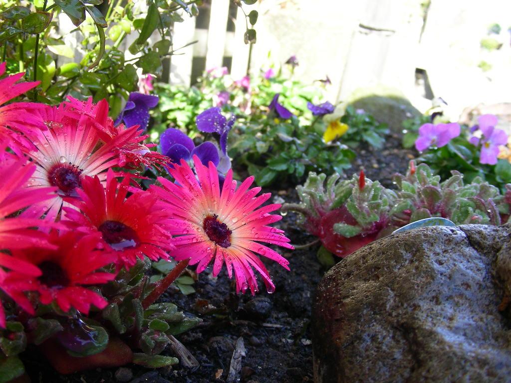 土ふるいや庭の整理・・・_b0096584_2213995.jpg