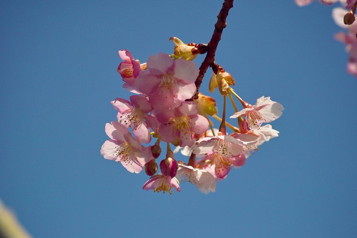 強烈な花粉が・・・_c0124795_23382184.jpg