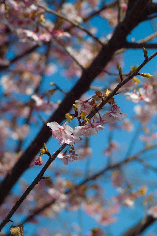 強烈な花粉が・・・_c0124795_2338671.jpg