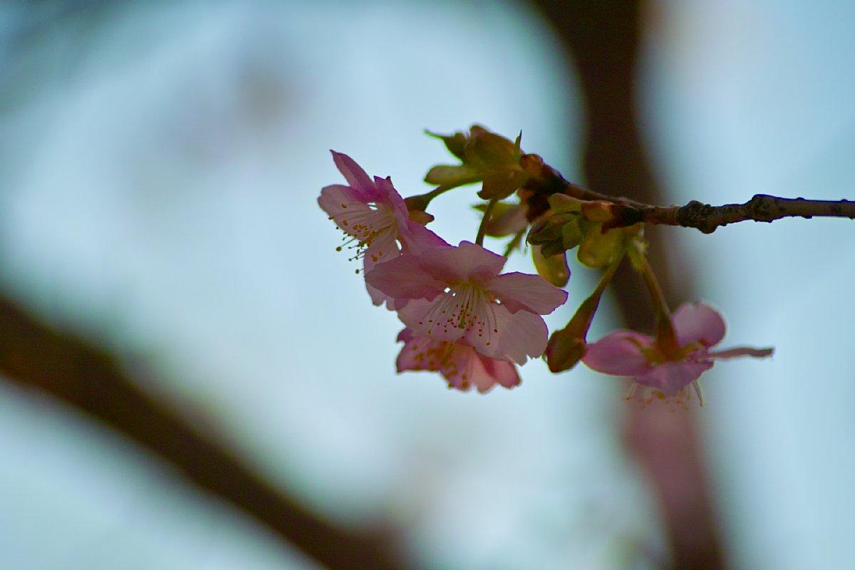 強烈な花粉が・・・_c0124795_23392772.jpg