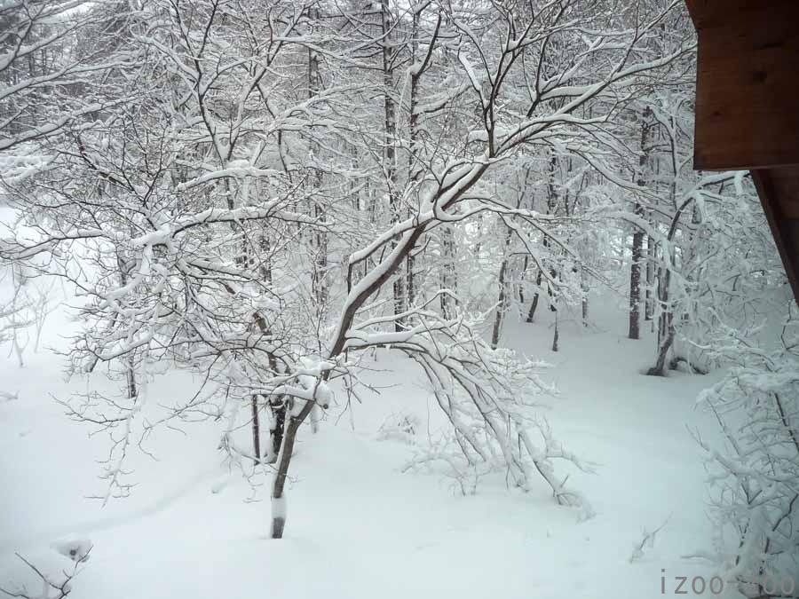 朝、雪景色で目覚める_c0223095_18272739.jpg