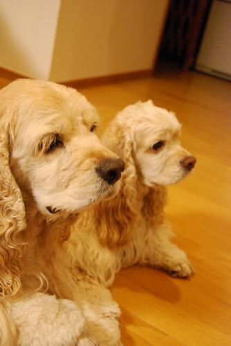 犬を撮る…_c0124100_22521141.jpg