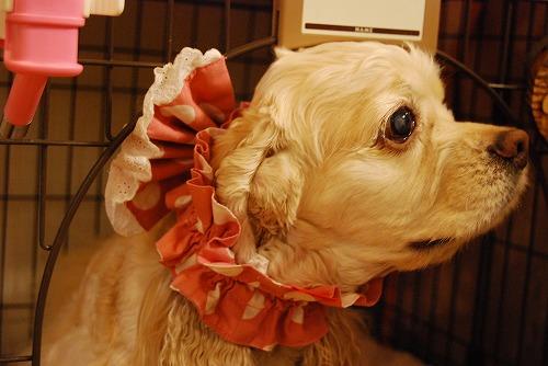 犬を撮る…_c0124100_2252497.jpg