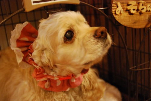 犬を撮る…_c0124100_22525998.jpg