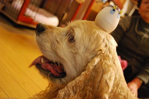 犬を撮る…_c0124100_2253196.jpg