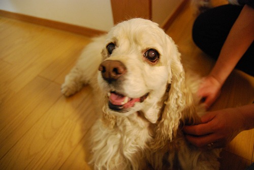 犬を撮る…_c0124100_22532855.jpg