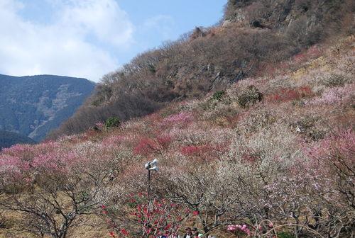 梅香り 犬も笑顔の 花の山_f0101201_21543881.jpg