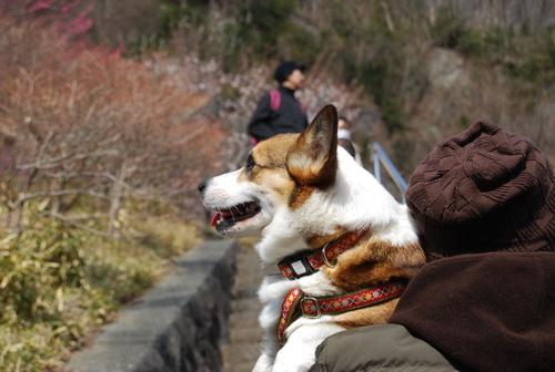 梅香り 犬も笑顔の 花の山_f0101201_21591992.jpg