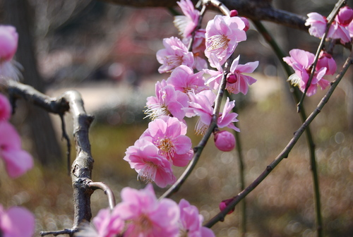 梅香り 犬も笑顔の 花の山_f0101201_2244399.jpg