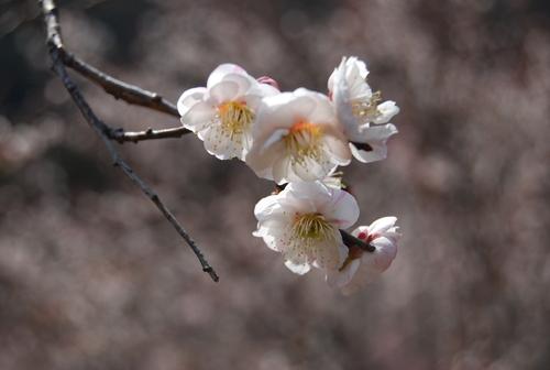 梅香り 犬も笑顔の 花の山_f0101201_224571.jpg