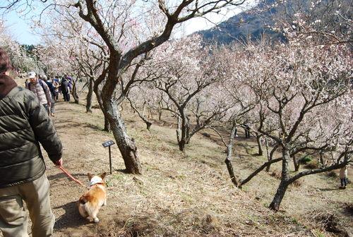 梅香り 犬も笑顔の 花の山_f0101201_226648.jpg