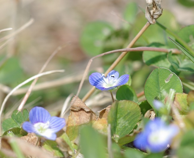 青紫のじゅうたん_d0147812_1345054.jpg