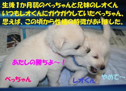 f0121712_23173689.jpg