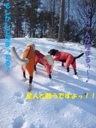 f0176830_2022451.jpg