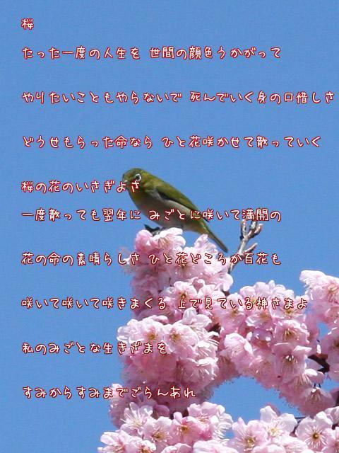 a0014141_1292223.jpg