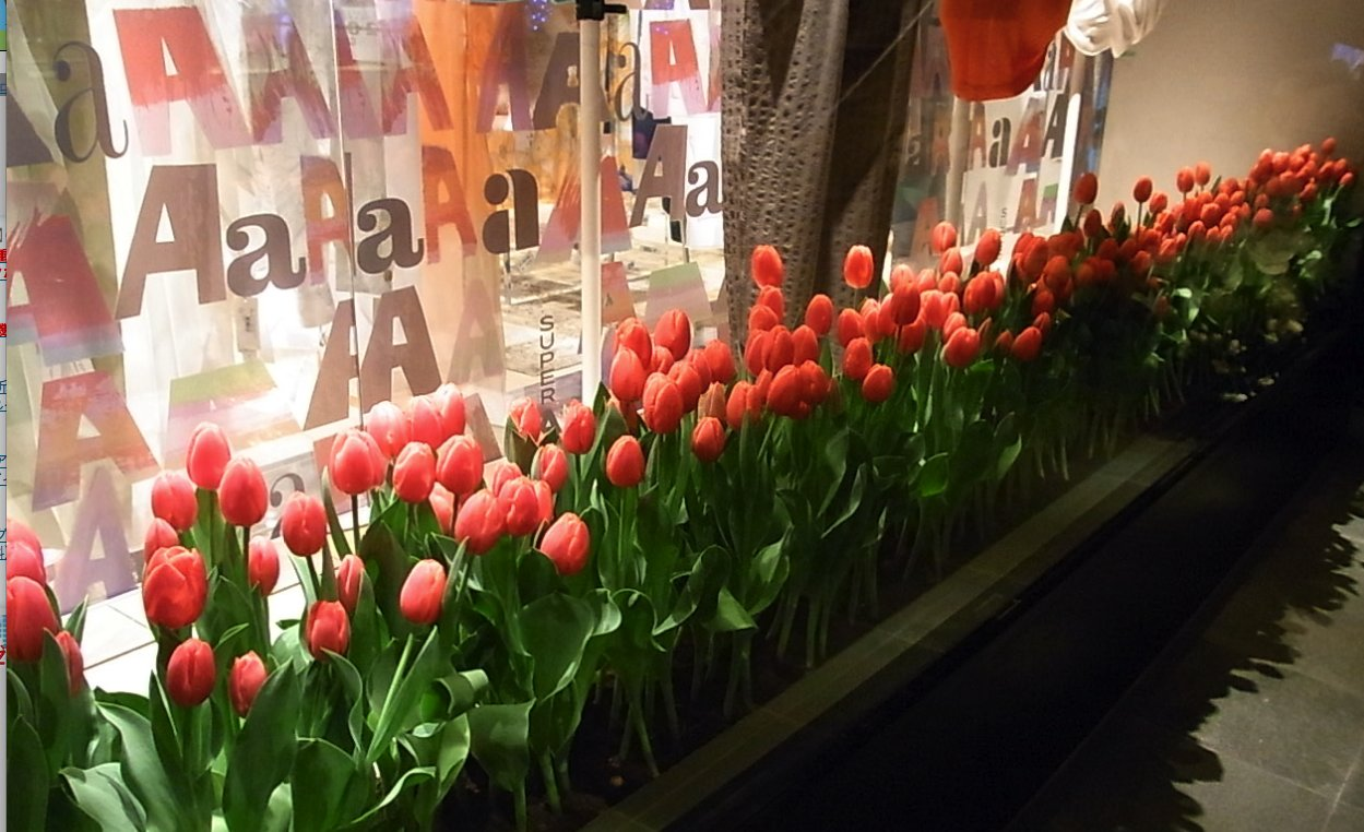 チューリップから、春がはじまる_c0113755_04867.jpg