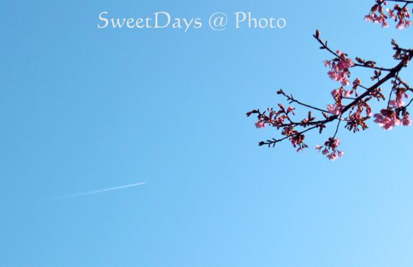 春を探しに新宿御苑へ ~梅と桜~_e0046675_052292.jpg