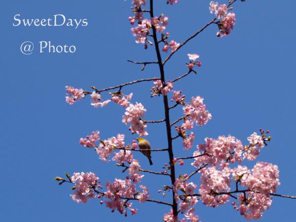 春を探しに新宿御苑へ ~梅と桜~_e0046675_053891.jpg