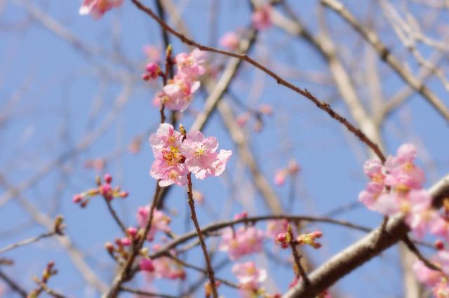 桜の花、舞い上がる道を_d0121678_14165110.jpg