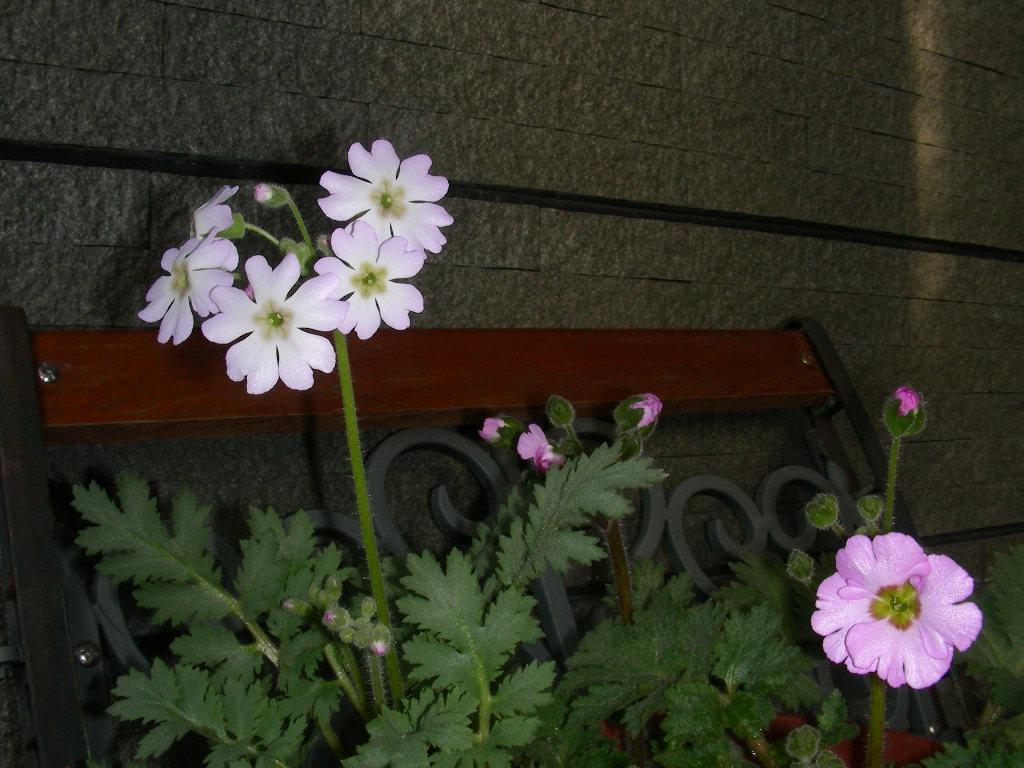 庭のあちこち~_b0096584_2210029.jpg