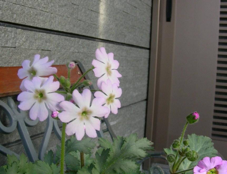 庭のあちこち~_b0096584_2292019.jpg