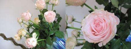 f0146587_1634680.jpg