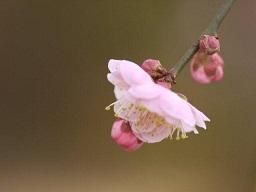 春を探して植物園に、百花園に!! その1 千葉市緑化植物園_b0175688_13133159.jpg