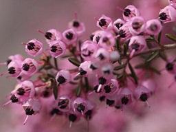 春を探して植物園に、百花園に!! その1 千葉市緑化植物園_b0175688_13162979.jpg