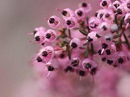 春を探して植物園に、百花園に!! その1 千葉市緑化植物園_b0175688_1316329.jpg