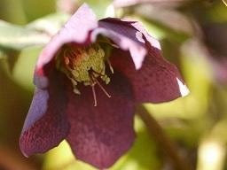 春を探して植物園に、百花園に!! その1 千葉市緑化植物園_b0175688_13175231.jpg