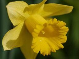 春を探して植物園に、百花園に!! その1 千葉市緑化植物園_b0175688_13182146.jpg