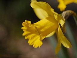 春を探して植物園に、百花園に!! その1 千葉市緑化植物園_b0175688_1318356.jpg