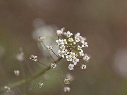 春を探して植物園に、百花園に!! その1 千葉市緑化植物園_b0175688_1330194.jpg