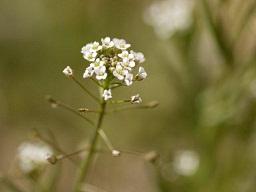 春を探して植物園に、百花園に!! その1 千葉市緑化植物園_b0175688_13304430.jpg