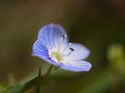 春を探して植物園に、百花園に!! その1 千葉市緑化植物園_b0175688_13325031.jpg