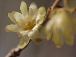 春を探して植物園に、百花園に!! その1 千葉市緑化植物園_b0175688_1333289.jpg