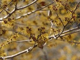 春を探して植物園に、百花園に!! その1 千葉市緑化植物園_b0175688_1353679.jpg