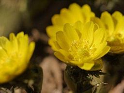 春を探して植物園に、百花園に!! その1 千葉市緑化植物園_b0175688_1375287.jpg