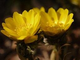 春を探して植物園に、百花園に!! その1 千葉市緑化植物園_b0175688_13816100.jpg