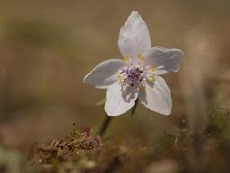春を探して植物園に、百花園に!! その2 向島百花園_b0175688_16525422.jpg