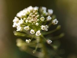 春を探して植物園に、百花園に!! その2 向島百花園_b0175688_17164626.jpg