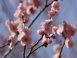 春を探して植物園に、百花園に!! その2 向島百花園_b0175688_1724790.jpg