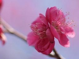 春を探して植物園に、百花園に!! その2 向島百花園_b0175688_1731613.jpg