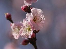 春を探して植物園に、百花園に!! その2 向島百花園_b0175688_173222.jpg