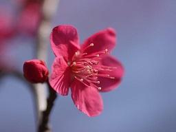 春を探して植物園に、百花園に!! その2 向島百花園_b0175688_1733485.jpg