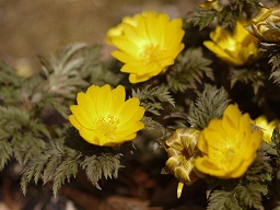 春を探して植物園に、百花園に!! その2 向島百花園_b0175688_17553433.jpg