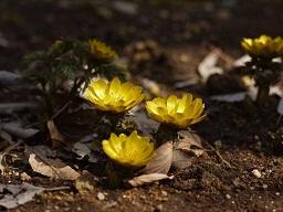 春を探して植物園に、百花園に!! その2 向島百花園_b0175688_17554725.jpg