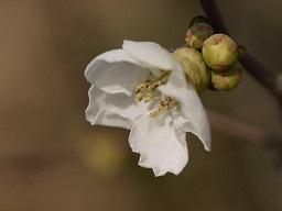 春を探して植物園に、百花園に!! その2 向島百花園_b0175688_1774492.jpg